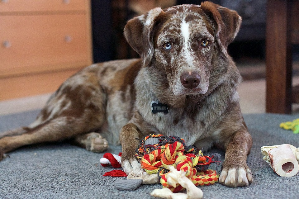 Los mejores consejos para dejar a tu perro sólo en casa