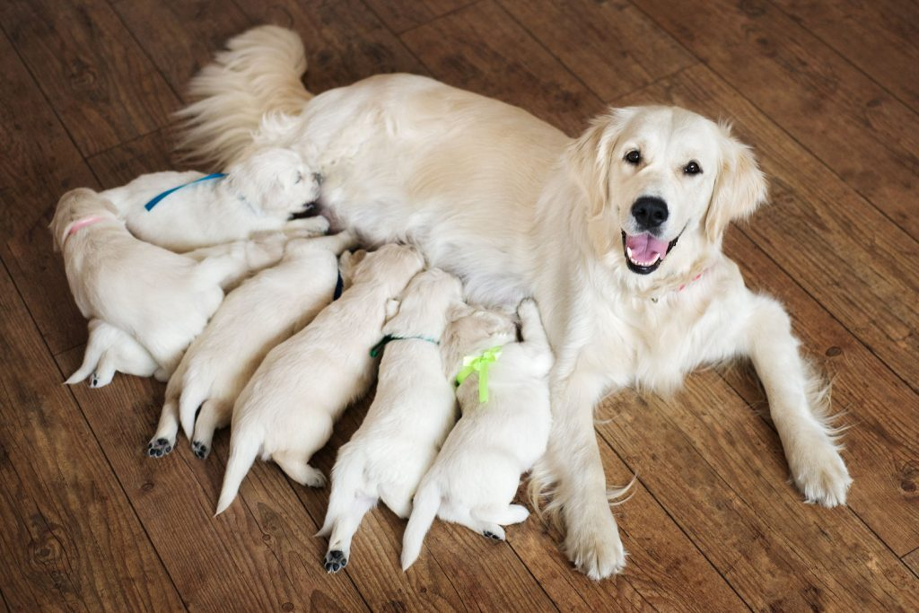como-cuidar-la-alimentacion-de-nuestro-perro-segun-su-edad