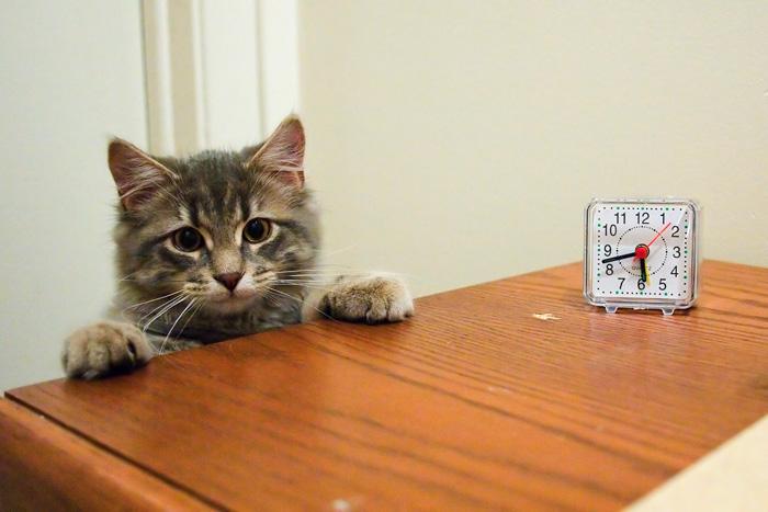 el-cambio-de-hora-como-afecta-a-mi-mascota