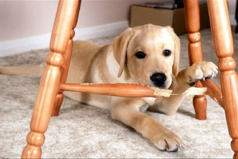 los-problemas-de-comportamiento-mas-frecuentes-de-un-cachorro-en-casa