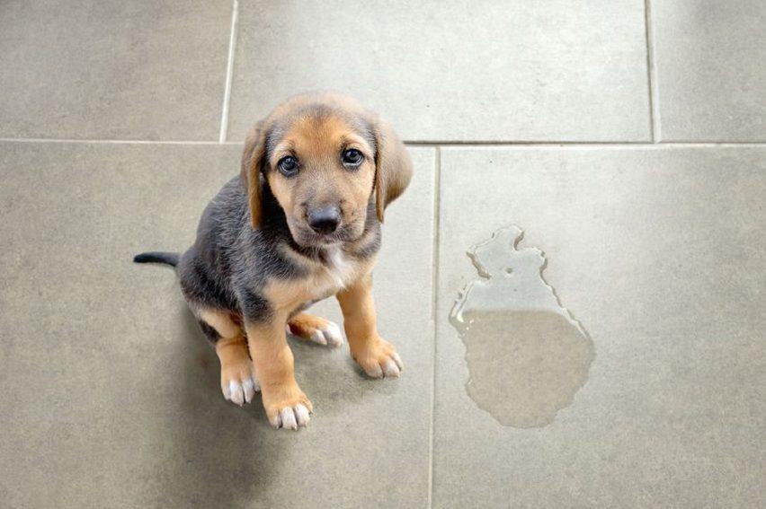 los-problemas-de-comportamiento-mas-frecuentes-de-un-cachorro-en-casa-segurvet