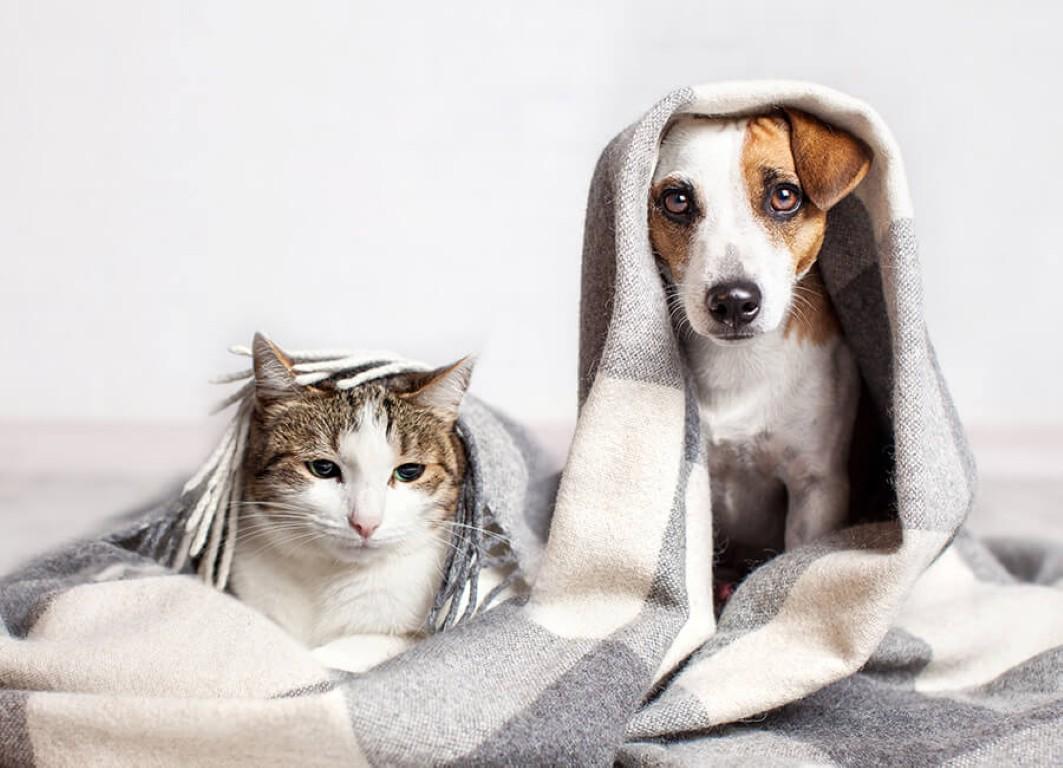 mascotas-en-invierno-claves-para-protegerles-contra-el-frio