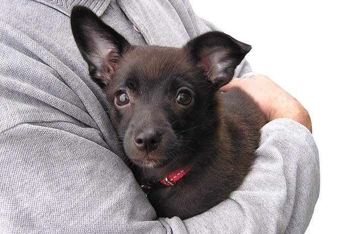 como-trasladar-a-un-perro-herido-de-forma-segura-al-veterinario