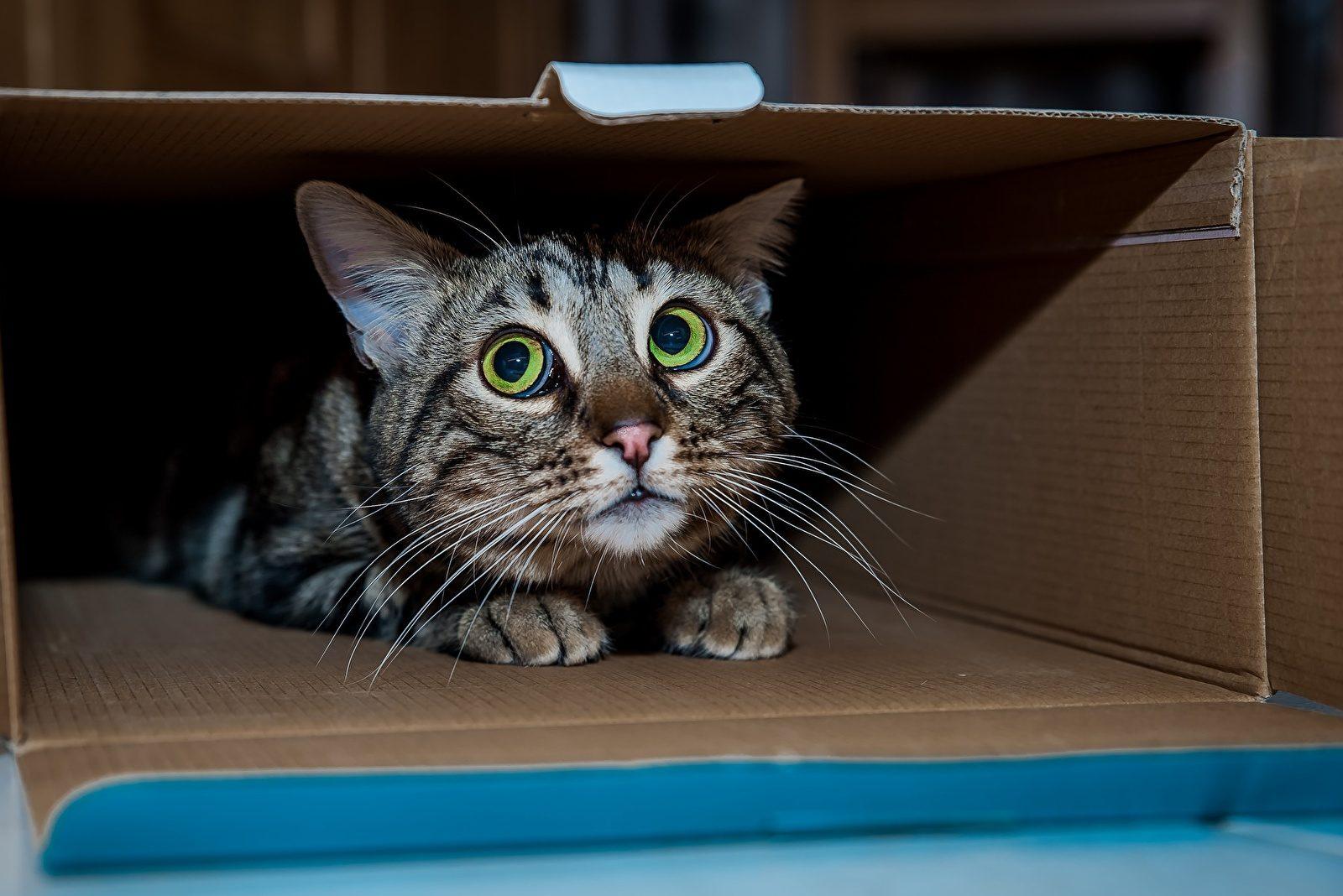 a-que-cosas-le-tienen-miedo-los-gatos-blog-segurvet