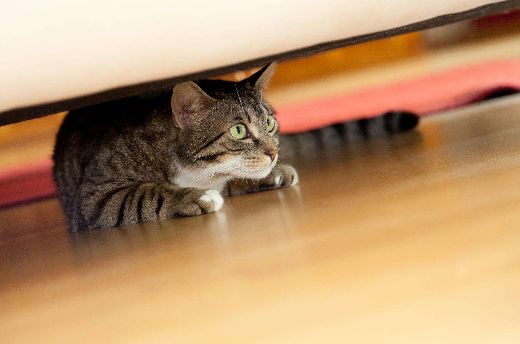 gatos-en-cuarentena-consejos-para-evitar-estres-en-tu-mascota