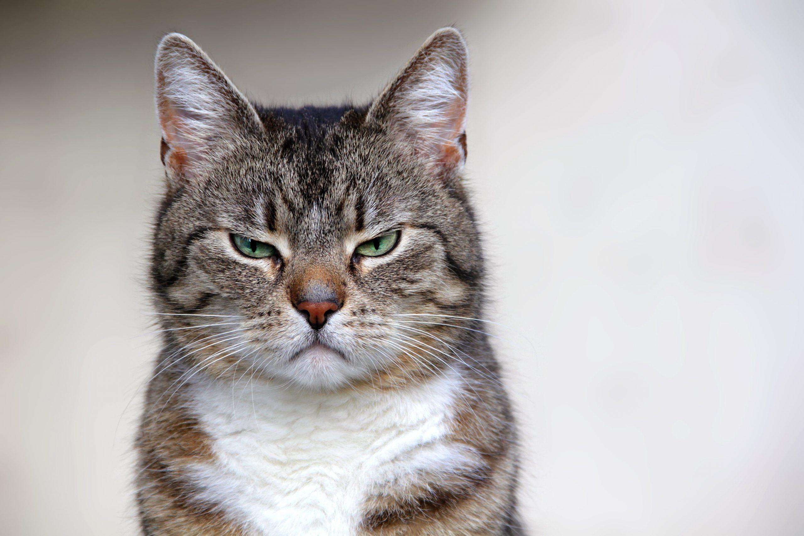 Gatos en cuarentena: Consejos para evitar estrés en tu mascota