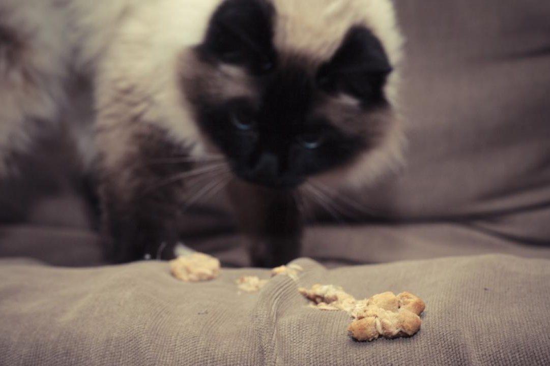 como-tratar-las-bolas-de-pelo-en-nuestro-gato