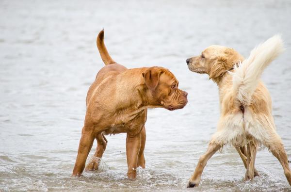 cinco-beneficios-de-esterilizar-un-perro