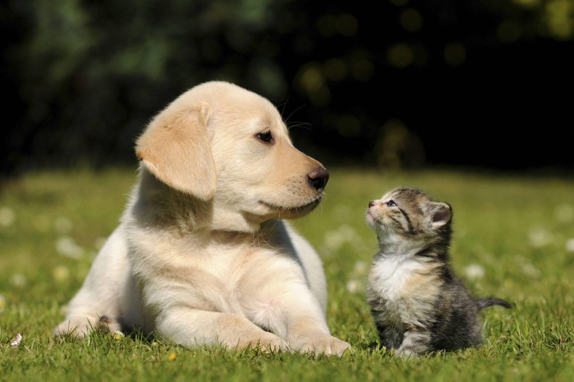 tu-mascota-tiene-alergia