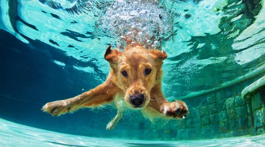 perro piscina