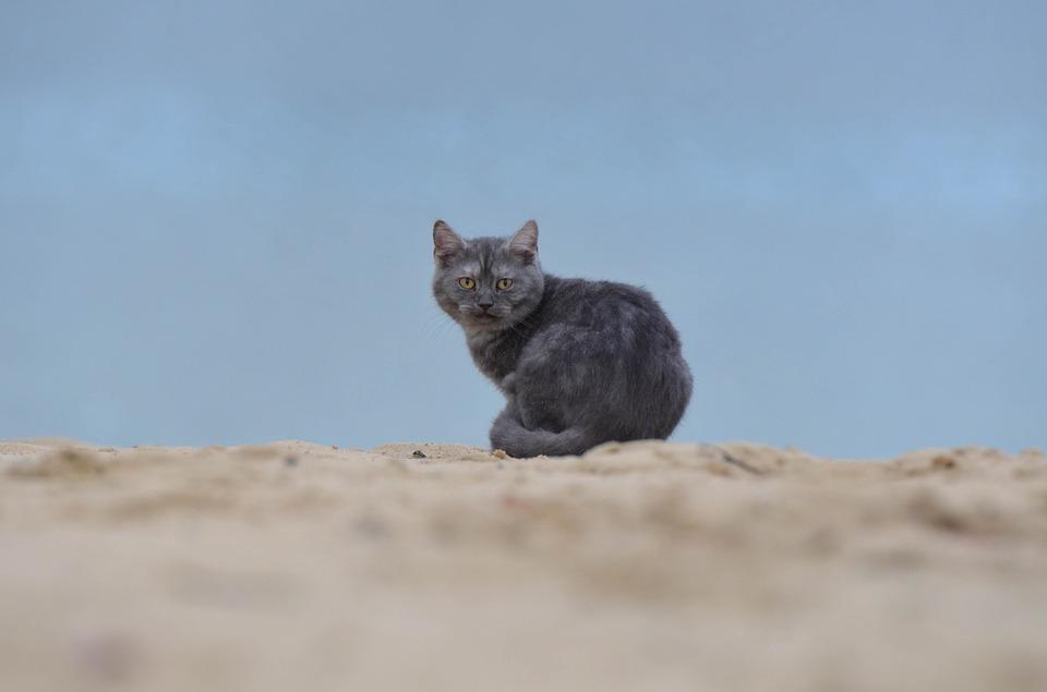 gato playa