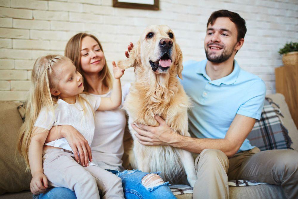 cinco-razas-de-perro-para-criar-en-familia