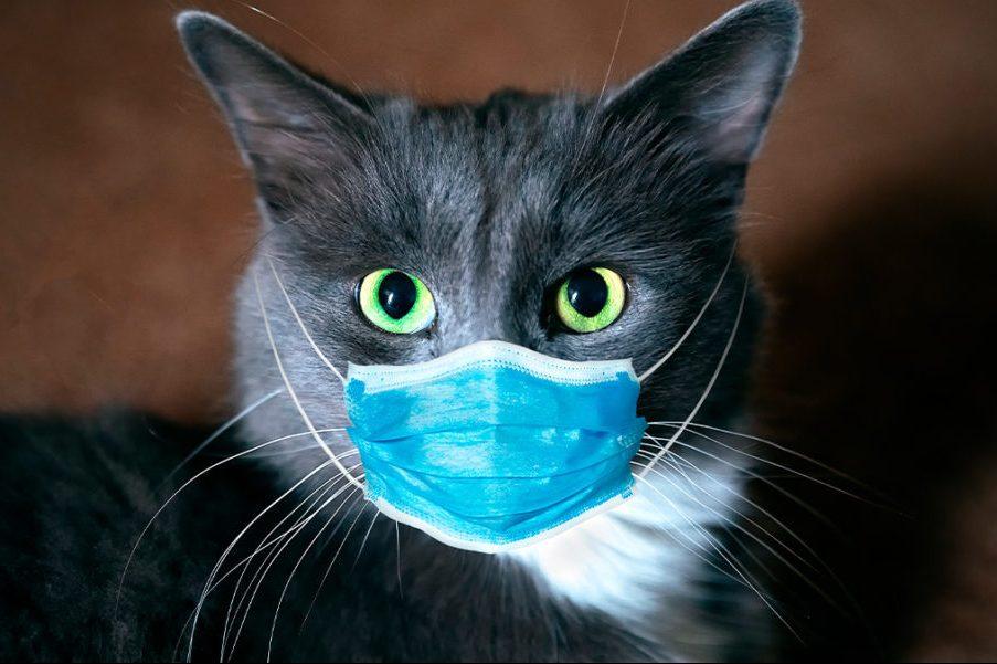los-gatos-podrian-ayudar-a-desarrollar-la-vacuna-contra-la-covid-19