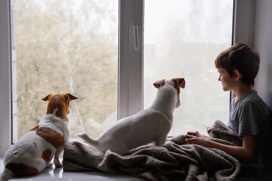 las-mascotas-el-mejor-apoyo-ante-la-pandemia