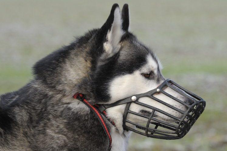 el-uso-de-bozales-en-perros-segurvet-seguro-para-mascotas-