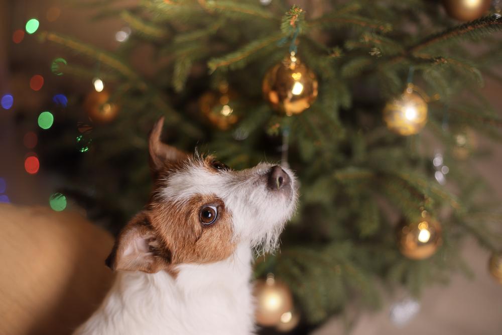 los-potenciales-peligros-que-puede-sufrir-una-mascota-en-navidad